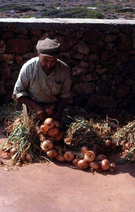 Plaiting the onions