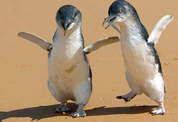 George Miller's movie Happy Feet raises the consciousness of Australians about the lives of penguins in Sydney.