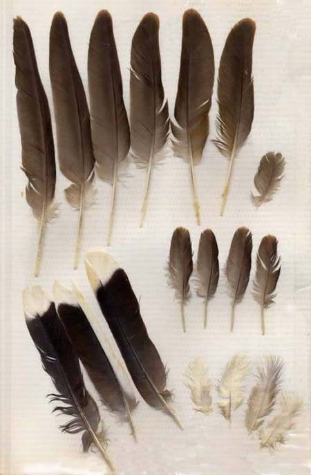 Feathers found in Fratsia