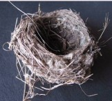 Bird nest from Fratsia