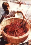 Fresh spiny lobsters.