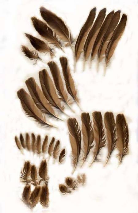 Feathers from Fratsia