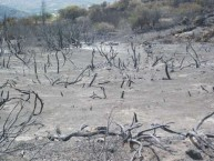 The fires in Mitata, August 2010