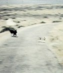 Hunting dog chasing a hare.