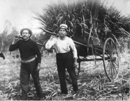 Sugarcane cutters, Childers, Qld, c.1917. John Comino (right) with a Greek-Cypriot co-worker.