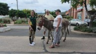 The presence of a donkey is mandatory at grand Roxy functions