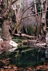 Watermills at Milopotamos in January