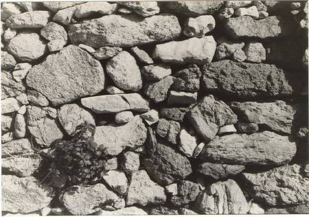 A plant grows out of a rock wall, Potamos
